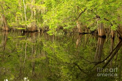 Lush Green Reflections At Manatee Springs Poster