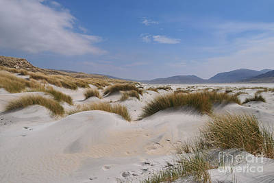 Luskentyre Sand Dunes Poster by Nichola Denny