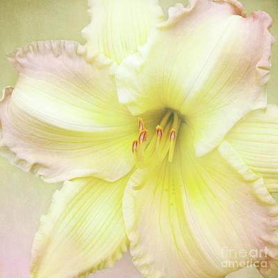 Luxurious Lily Poster by Kathi Mirto