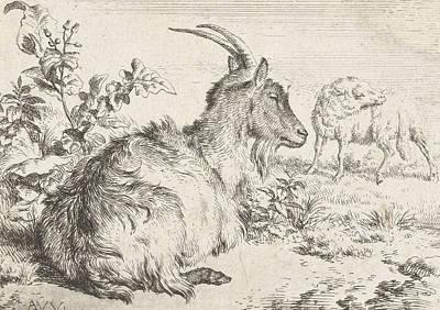 Lying Goat Poster by Adriaen van de Velde