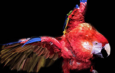 Macaw Poster by Martin Newman