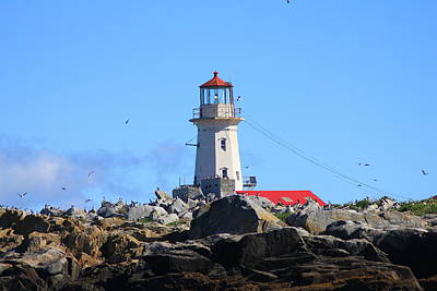 Machias Seal Island Lighthouse Poster by John Burk