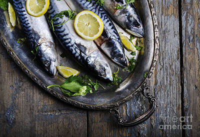 Mackerels On Silver Plate Poster