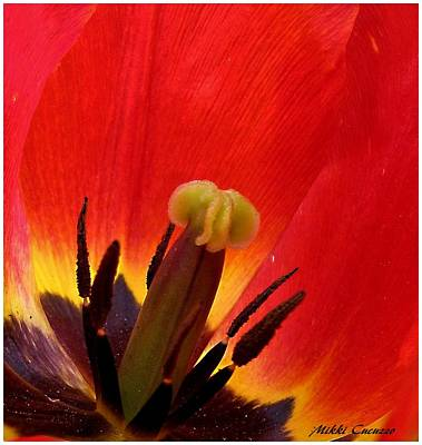 Macro Of Tulip Poster by Mikki Cucuzzo