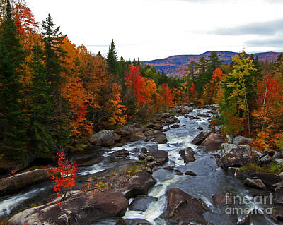 Magalloway River In Fall Poster