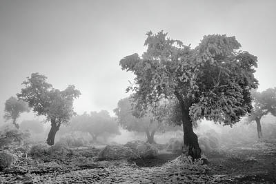 Magic Morning Bw Poster by Guido Montanes Castillo