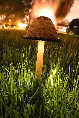 Magic Mushroom Poster by Jack Edjourian