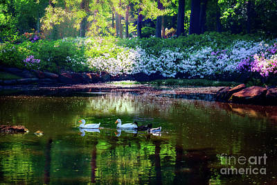 Magical Beauty At The Azalea Pond Poster by Tamyra Ayles