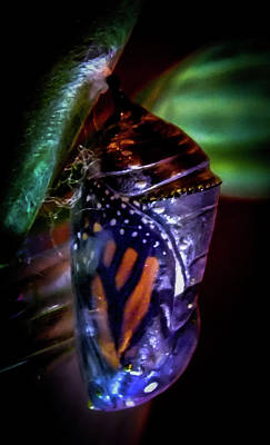 Magical Monarch Poster by Karen Wiles