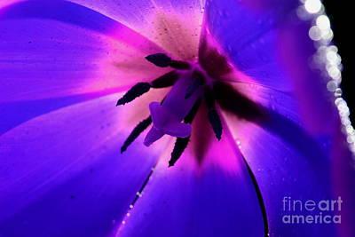 Magical Tulip Poster