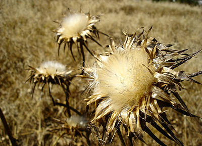 Magnificence - Departing Milk Thistles Poster
