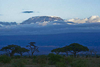 Magnificent Kilimanjaro Poster