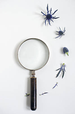 Magnifying Glass And Blue Thistle Poster
