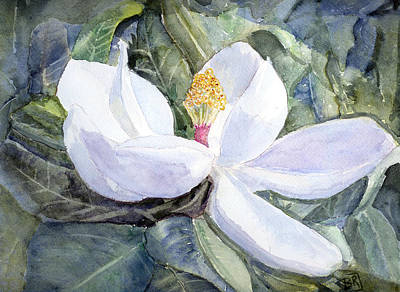 Magnolia Blossom Poster by Barry Jones