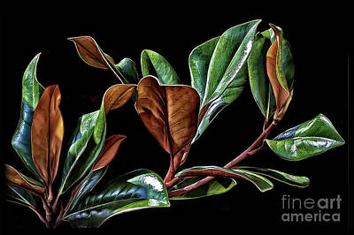 Magnolia Leaves Poster
