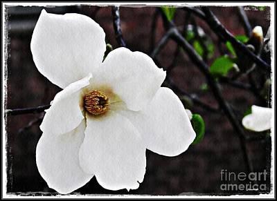 Magnolia Memories 1 Poster by Sarah Loft