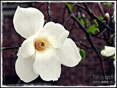 Magnolia Memories 2 Poster by Sarah Loft