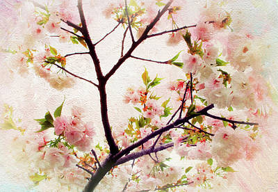 Poster featuring the photograph Asian Cherry Blossoms by Jessica Jenney