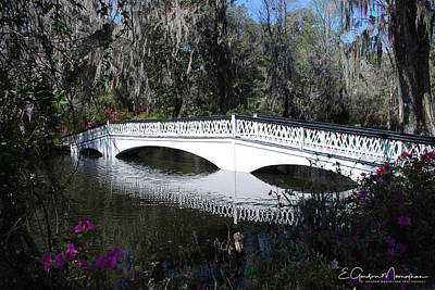 Magnolia Plantation Bridge Poster by Gordon Mooneyhan
