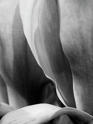 Magnolia Poster by Rod Stewart