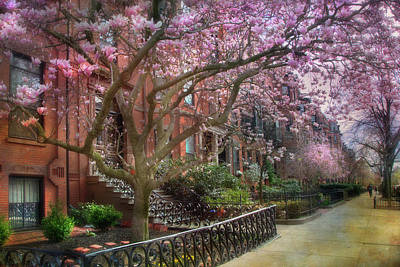 Magnolia Trees In Spring - Back Bay Boston Poster