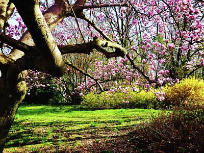 Magnolias And Forsythias Poster by Susan Savad