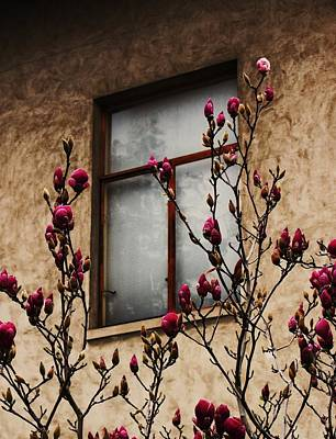 Magnolias Before Window Poster by Amy Neal