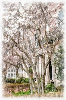 Magnolias In Back Bay Poster by Edward Fielding