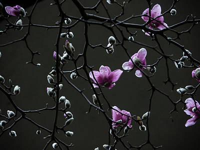 Magnolias In Rain Poster