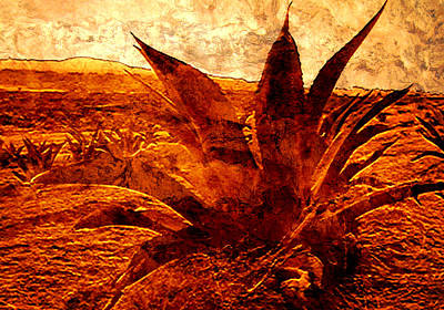 Maguey Agave Poster