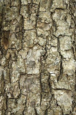 Mahogany Bark Poster
