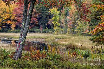 Maine Autumn Poster