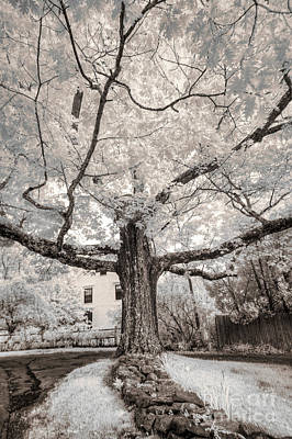 Poster featuring the photograph Maine Neighborhood Tree by Craig J Satterlee