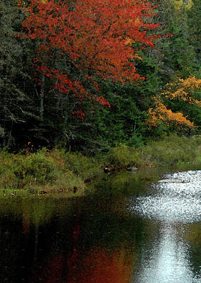 Maine Stream In The Fall Poster