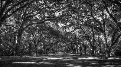 Majestic Live Oaks Wormsloe Plantation Art Poster by Reid Callaway