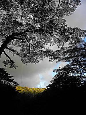 Majestic Manoa Falls Poster by Elizabeth Hoskinson