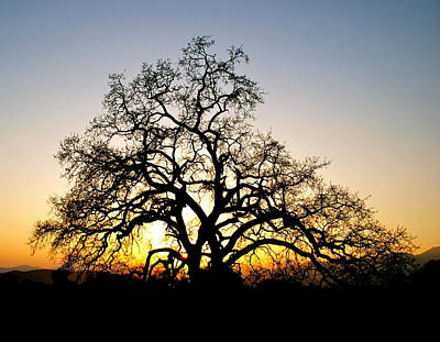 Majestic Oak Tree Sunset Poster