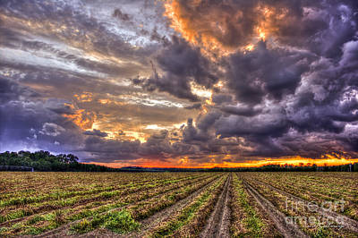 Poster featuring the photograph Majestic Peanut Harvest Sunset Art by Reid Callaway