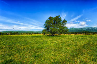 Majestic White Oak Tree In Cades Cove - 3 Poster by Frank J Benz
