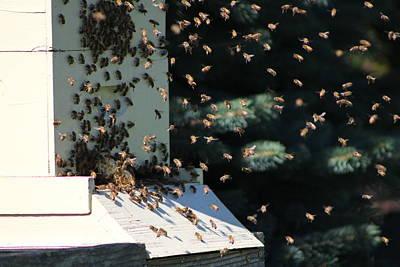 Making Honey - Landscape Poster