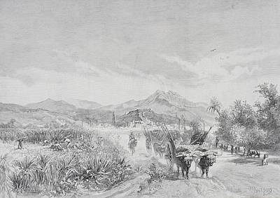 Malaga, Spain, From The Sugar Fields By Poster