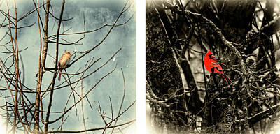 Male And Female Cardinal Poster
