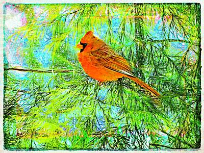 Male Cardinal In Juniper Tree Poster