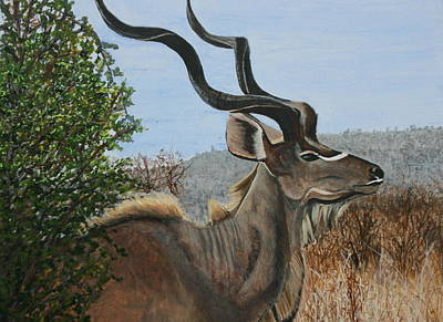 Male Kudu Antelope Poster by Betty-Anne McDonald
