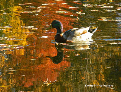 Mallard Duck In The Fall Poster