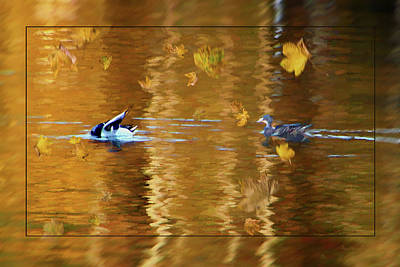Mallard Ducks On Magnolia Pond - Painted Poster