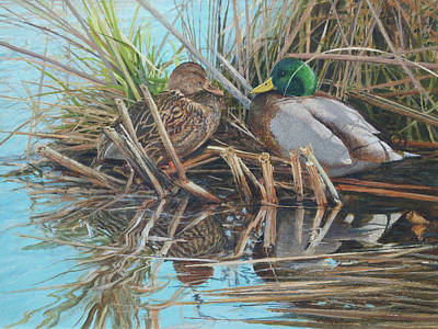 Mallards At Rithet's Bog Poster