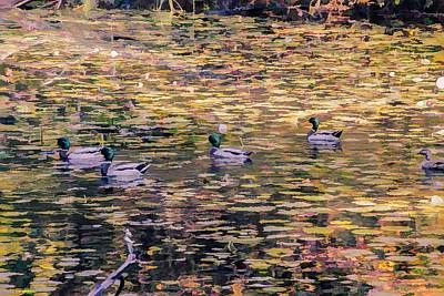Mallards On Autumn Pond Poster