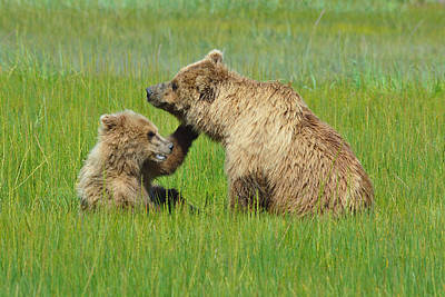 Mama And Baby Bear In The Meadow Poster
