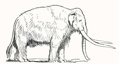 Mammoth. After A Work C.1920 Poster